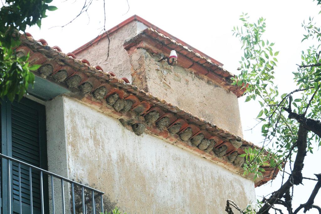 Schwalbennester in Pisciotta