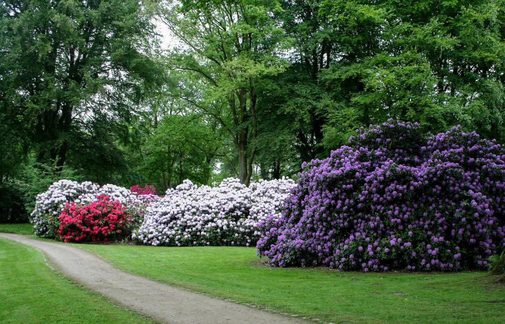 rhododendron park bremen heinz josef l cking. Black Bedroom Furniture Sets. Home Design Ideas