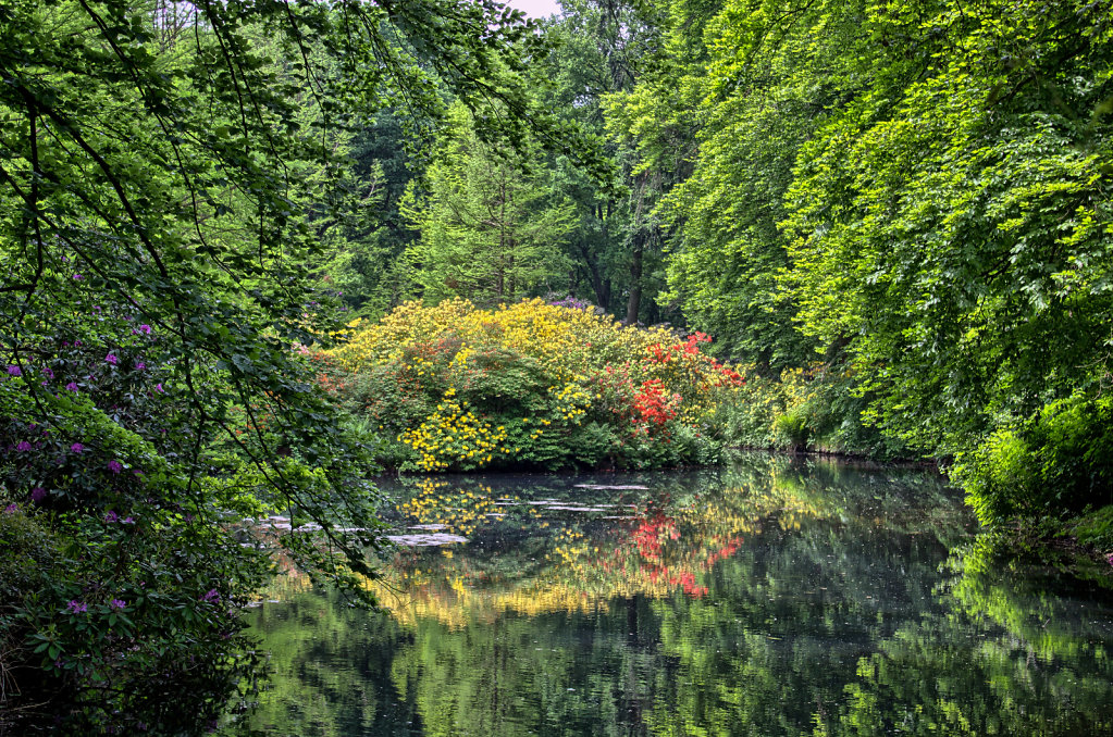 Teich im Rhododendron-Park Bremen