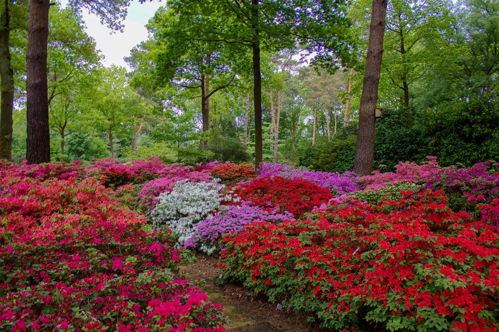 Azaleengarten im Rhododendron-Park Bremen