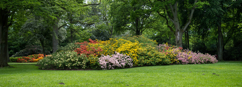 Rhododendron-Park Bremen